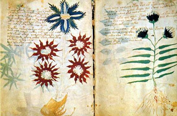 manuscrito de Voynich 1 (570x375)