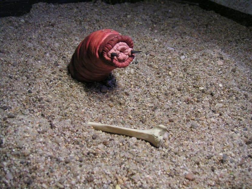 gusano-mongol-de-la-muerte